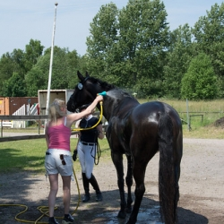 """2015-07-04-Tävling Frosta_-23 • <a style=""""font-size:0.8em;"""" href=""""http://www.flickr.com/photos/130075682@N08/19470257312/"""" target=""""_blank"""">View on Flickr</a>"""